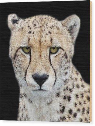 Wood Print featuring the photograph Cheetah by Lynn Bolt