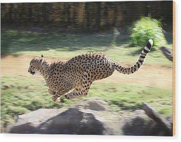 Cheetah Sprint Wood Print by Joseph G Holland