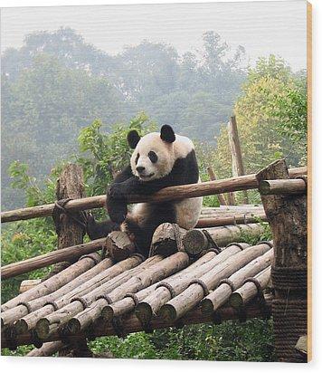 Chengdu Panda Wood Print by Carla Parris