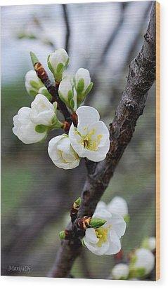 Wood Print featuring the photograph Cherries To Be... by Marija Djedovic
