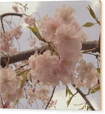 Wood Print featuring the photograph Cherry Blossom 2 by Andrea Anderegg