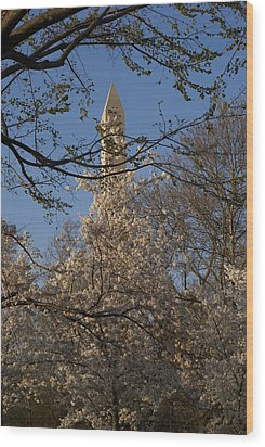 Cherry Blossom Dc Wood Print by Heidi Poulin