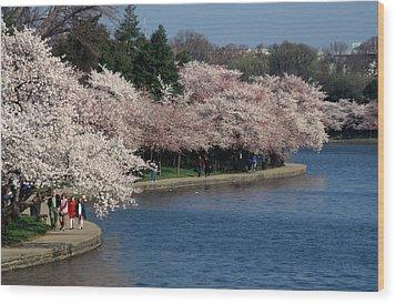 Cherry Blossom Festival, Jefferson Wood Print by Richard Nowitz