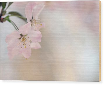 Cherry Blossom Wood Print by Images by Christina Kilgour