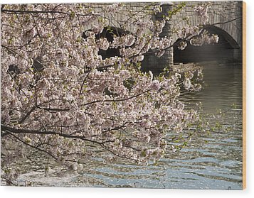 Wood Print featuring the photograph Cherry Blossom On Potomic by Darleen Stry