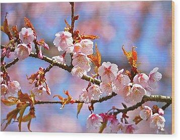 Cherry Blossom Wood Print by T. Kurachi