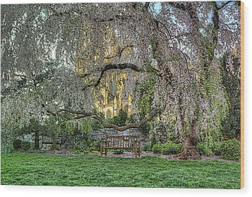 Cherry Blossoms At The Washington National Cathedral Wood Print by Metro DC Photography