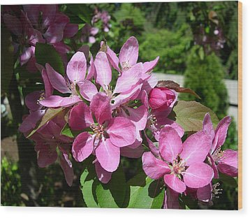 Cherry Blossoms Wood Print by Claude McCoy