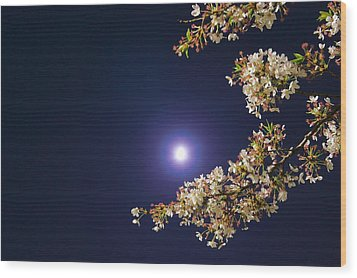 Cherry Blossoms Wood Print by GLIDEi7