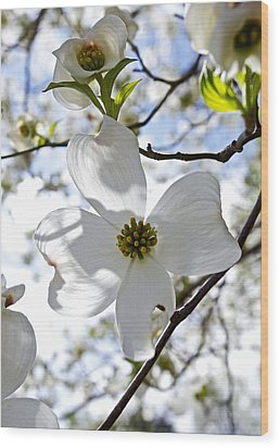 Cherry Blossoms I Wood Print by Glennis Siverson
