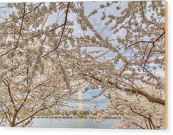 Cherry Blossoms Washington Dc 3 Wood Print by Metro DC Photography