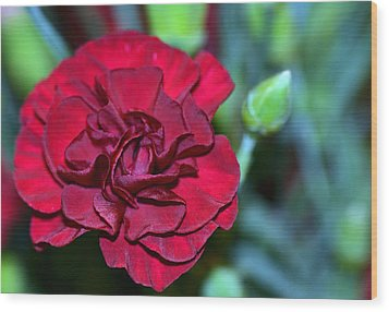 Cherry Red Carnation Wood Print by Sandi OReilly