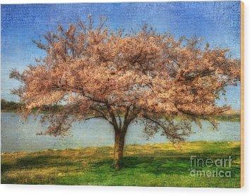 Cherry Tree Wood Print by Lois Bryan