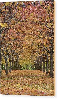 Wood Print featuring the photograph Cherry Tree Plantation by Bruno Santoro