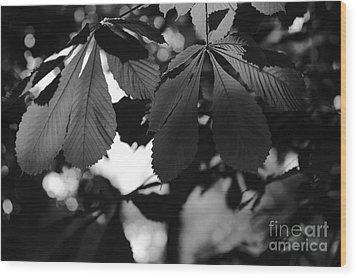 Chestnut Leaves Wood Print