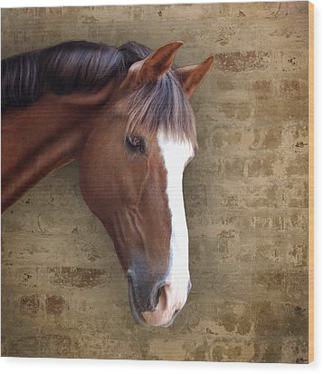 Chestnut Pony Portrait Wood Print