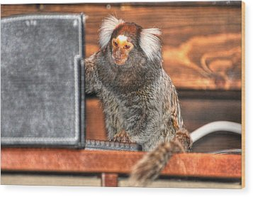 Chewy The Marmoset Wood Print by Barry R Jones Jr