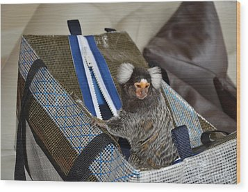 Chewy The Marmoset Going Fishing Wood Print by Barry R Jones Jr