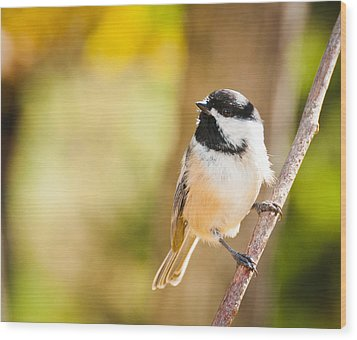 Chickadee Wood Print by Cheryl Baxter