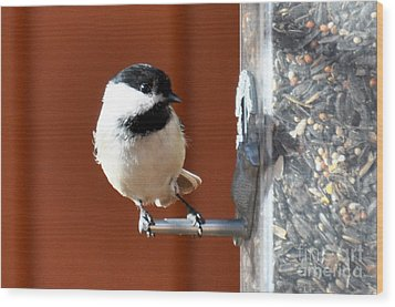 Wood Print featuring the photograph Chickadee by Cheryl McClure
