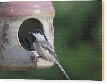 Chickadee Posing At Feeder Wood Print