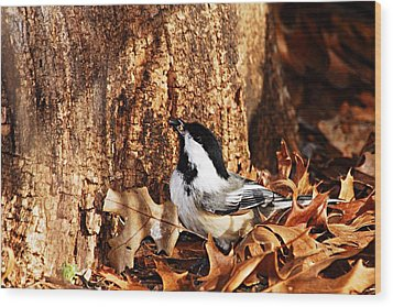 Chickadee With Sunflower Seed Wood Print by Larry Ricker