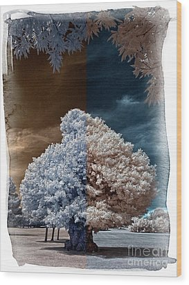Childhood Oak Tree - Infrared Photography Wood Print by Steven Cragg