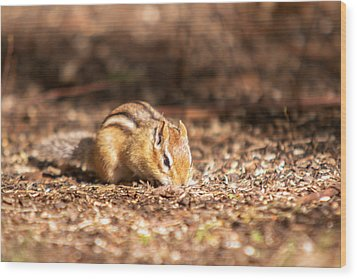 Wood Print featuring the photograph Chipmunk by Josef Pittner
