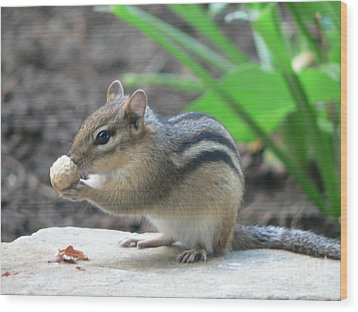 Wood Print featuring the photograph Chipmunk by Laurel Best
