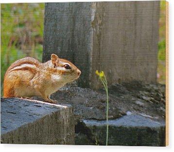 Chipmunk With Flower Wood Print