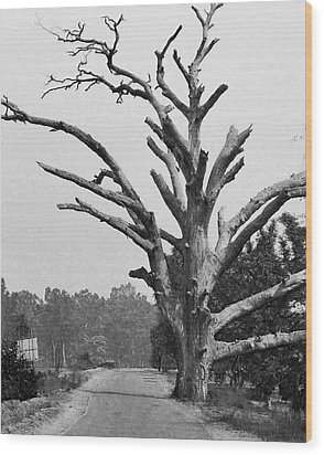 Chiseled Tree In Highway Wood Print by Sumit Mehndiratta