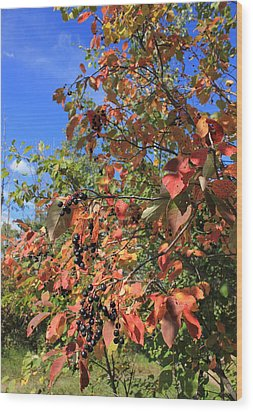 Chokecherry Tree Wood Print by Jim Sauchyn