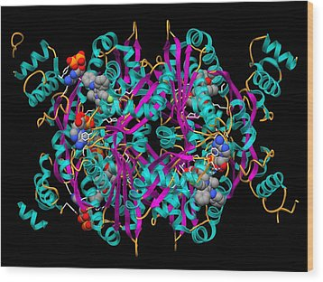 Cholesterol Producing Enzyme And Statin Wood Print by Laguna Design