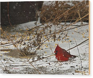 Wood Print featuring the photograph Christmas Cardinalthe  by Edward Peterson