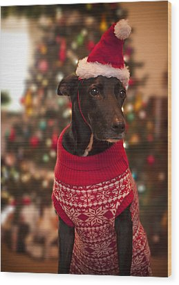 Christmas Dressed Up Dog Wood Print by Malcolm Smith