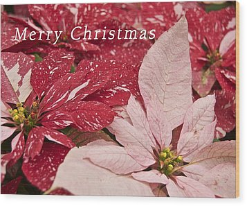 Christmas Poinsettias Wood Print by Michael Peychich