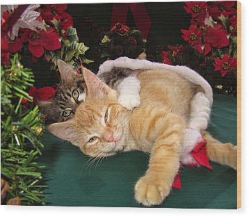 Christmas Time W Two Cats Together - Baby Maine Coon Kitty Cuddling With Smug Orange Tabby Kitten Wood Print by Chantal PhotoPix