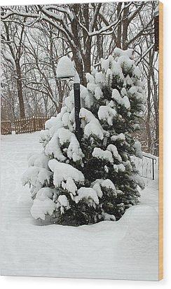 Christmas Tree Wood Print by Aimee L Maher Photography and Art Visit ALMGallerydotcom
