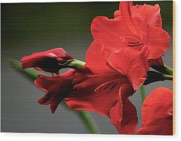 Chromatic Gladiola Wood Print