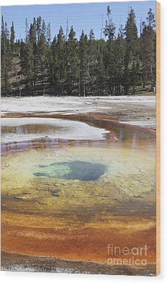 Chromatic Pool Hot Spring, Upper Geyser Wood Print by Richard Roscoe