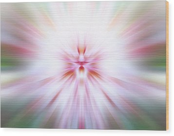 Wood Print featuring the photograph Chrysanthemum Burst by Anthony Rego