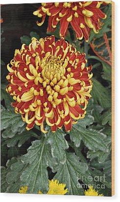 Wood Print featuring the photograph Chrysanthemum by Eva Kaufman
