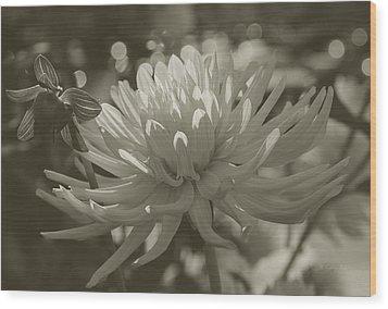 Chrysanthemum In Bloom Wood Print by Xueling Zou