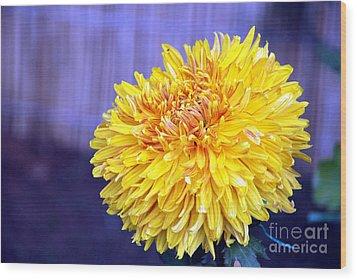Chrysanthemum Wood Print by Pravine Chester