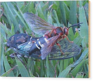 Cicada Killer Wood Print by John Crothers