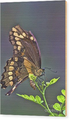 Circle Of Life Wood Print by Anne Rodkin