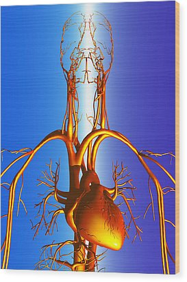 Circulatory System Wood Print by Pasieka