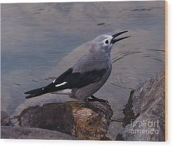 Clark's Nutcracker Wood Print by Cheryl Baxter