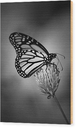 Classic Beauty Wood Print by Skip Willits