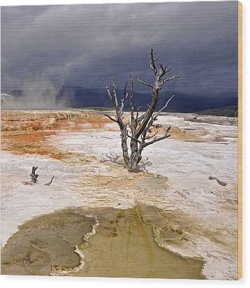 Clearing Storm At Mammoth Hot Springs Wood Print by Photo by Mark Willocks
